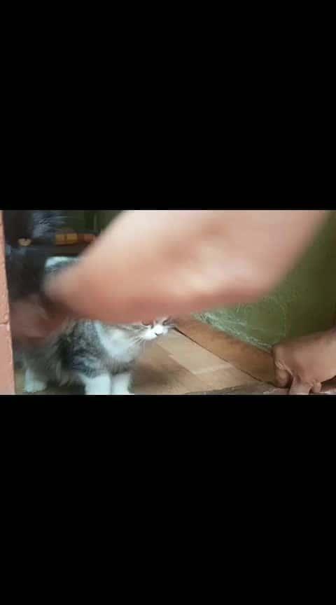 Cute Kitties at my House😍 #kittens  #catsofroposo  #kitties  #cutieee  #randomania  #roposorandoms  #ropossorandoms