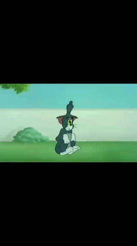 ##tom q d Jerry is tha best###