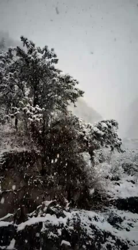 #follow_&_giift #snowfalling #himachalpradesh #incredibleindia  #romantic-scene #capturedchannel #winter
