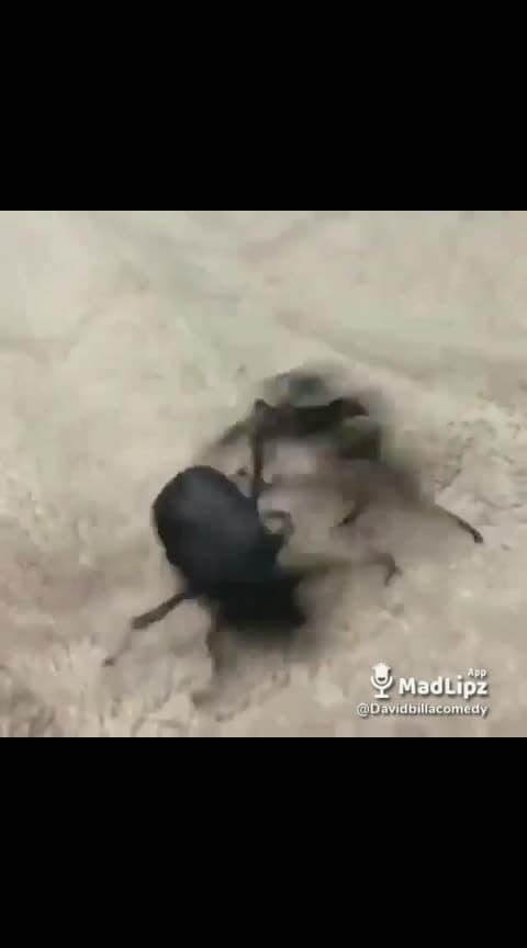 #comedy #bugs