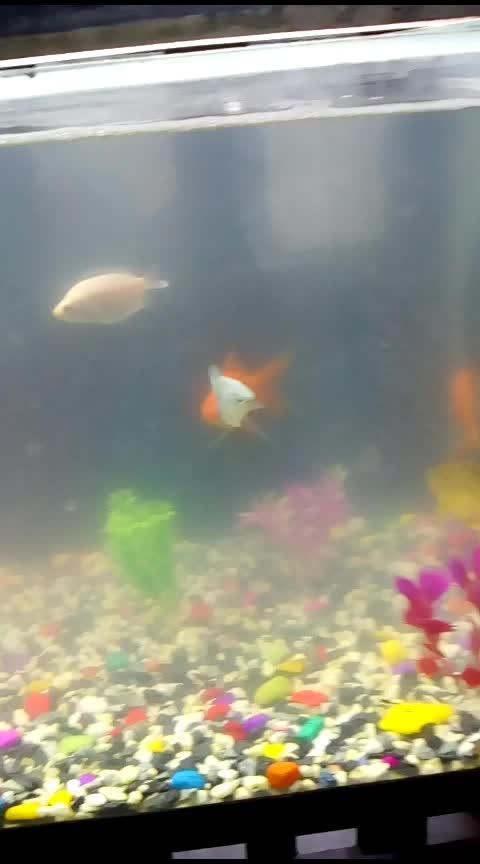 #coldwater #coldweather #fish #aquarium #roposo