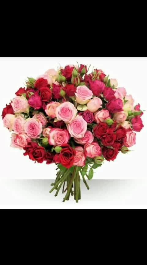 HAPPY ROSE DAY #happyroseday