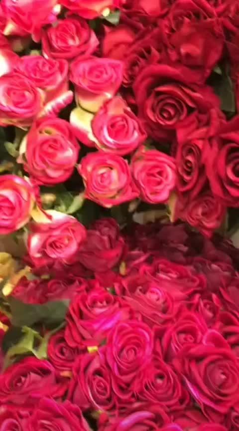 happy rose day #wow #happyroseday #likeforlikeback