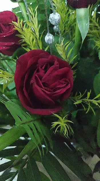 #red-rose #rosedayspecial #roseday2019 #so-ro-po-so #rising_star_on_roposo #risingstar #valentinesgifts