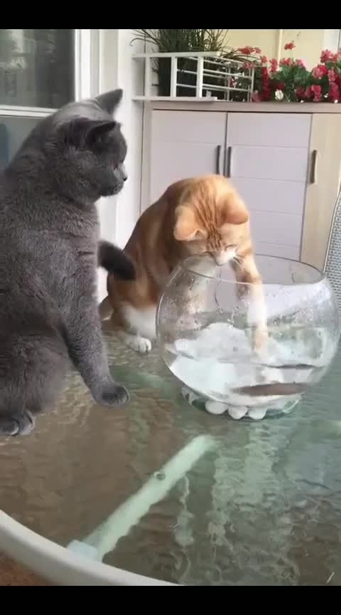 #cats and 🐠