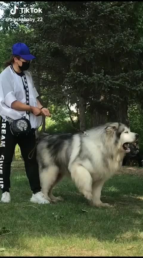 biggest dog ever... #dog  #dogsofinstagram  #dogstagram  #dogoftheday  #biggestfan  #indiatravel #indian  #india_everyday