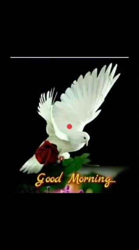 Good morning friends... #goodmorning #goodmorningpost #goodmorning-roposo #wishes #roposo-wishes