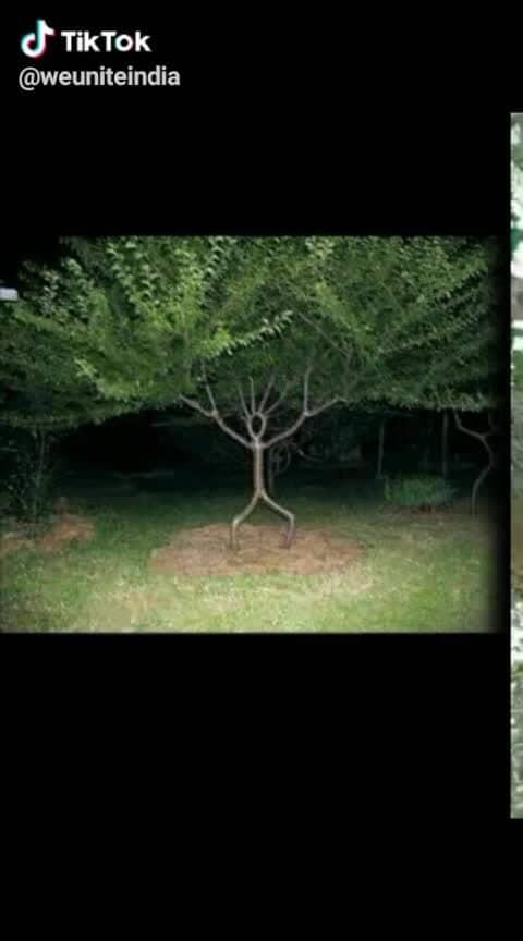 #amazing  #trees