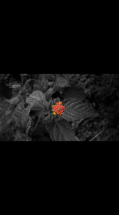 Flower. #flowers #flowerlove #nature #naturephotographer #photo #photographer_of_india #roposo #roposo-photoshootportrait #roposo-art #photo-roposo #picture #pictureoftheday #indian #tripura #northeast #northeastindia  @roposotalks @roposocontests @roposotutorial