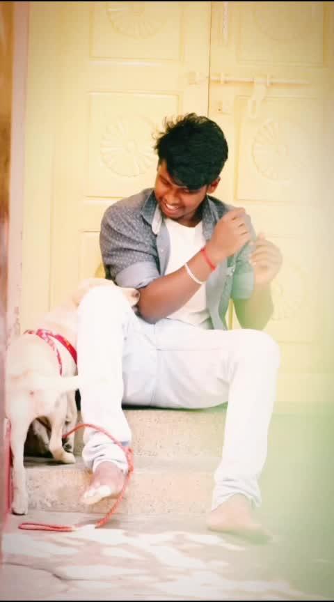 #puppy #puppylove #puppies #dog #dogs #doglover