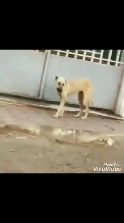 #bandra #bangda  #doggiestyle #dogstagram #dogs♥