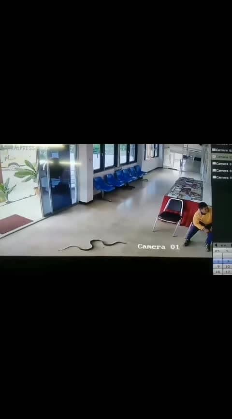 #Snake_in_police_station #Snake_attack #police_station_snake_attack #snake_bike #He_killed_snake