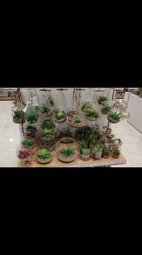 Awesome Artificial Plants 😍❤️🙏#ropo-love #roposofun #roposostar #roposoacting #roposodance #funny #fun #jokes #laughter #comedy #video #plants #nature
