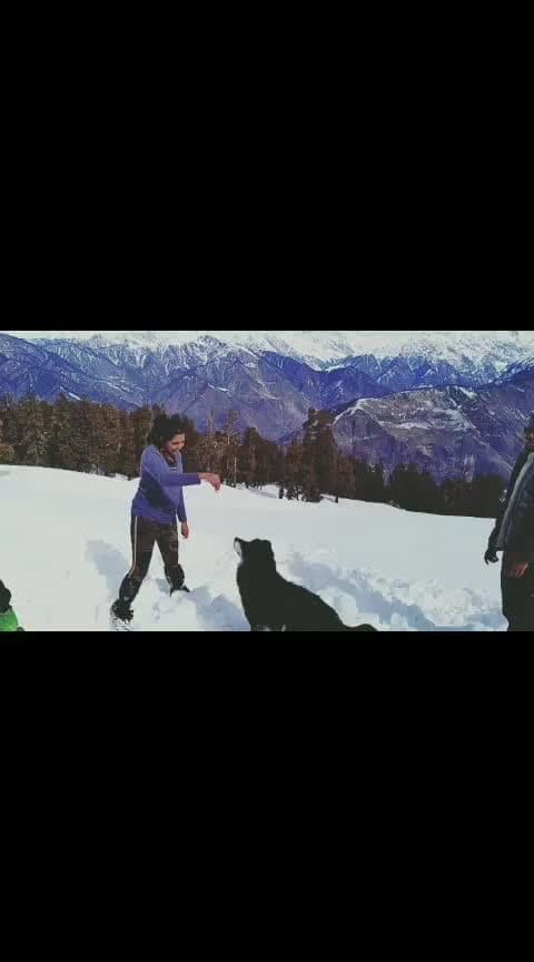 Anywhere I go, I would find a DOG🐶🐾 #dogs #dogsofinstagram #dogstagram #himalayas #uttarakhand #travel #adventure #travelblogger #trekking #mountains #picoftheday #instagood #instadaily #instamood #instablogger #indianblogger #trending #influencer