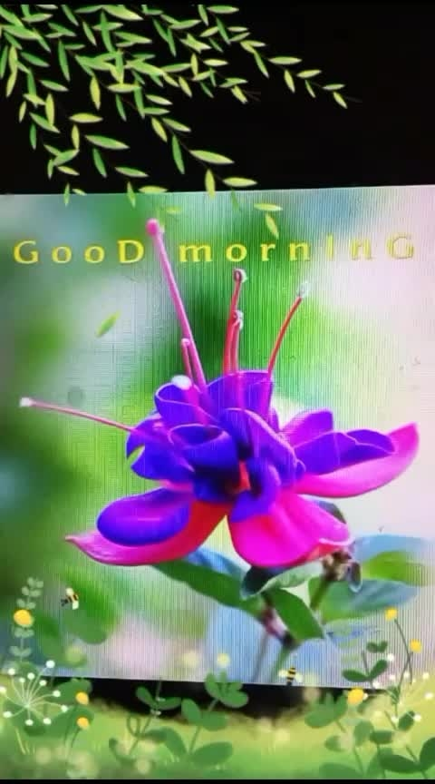 🙏 good morning freinds🙏