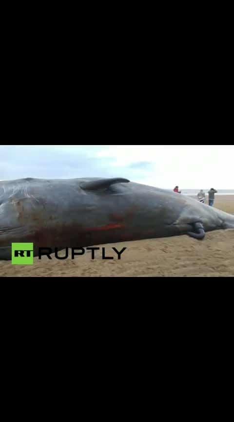 #biggest whale fish found UK coast