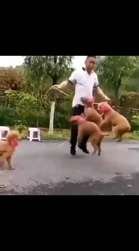 #amazing-dogs #awesome-puppy-skipping