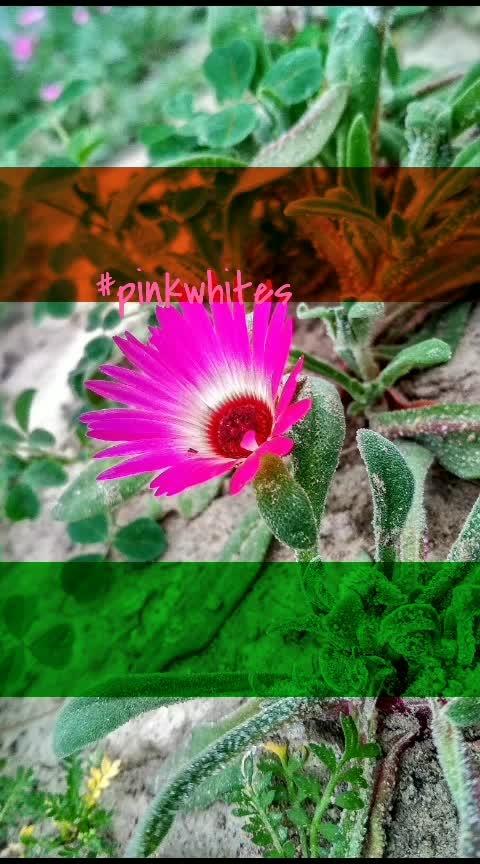 #pinkwhites  #lovenature  #nature