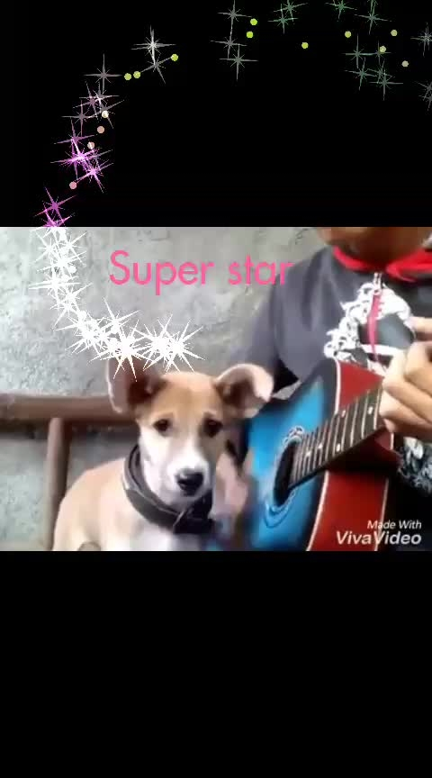 #super dog  #dog #how to do #superrrr #beatuful #love4love #quickly #super_