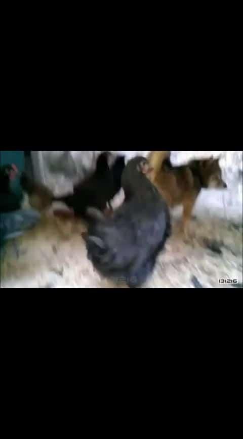 #hahaha 😂😂😂 #hen and dog 🐶 🐶 🐶 😂😂😂