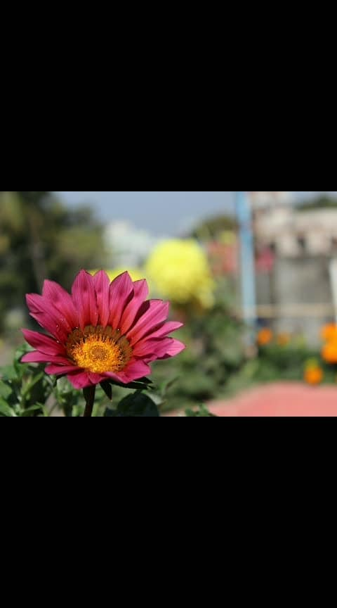#captured #canonphotography