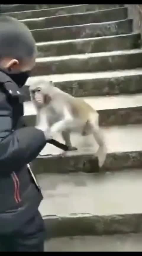 #comedy #animales #monkey