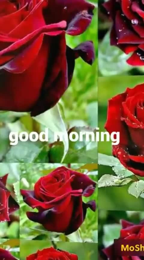 #roposo #morninginsta #good----morning