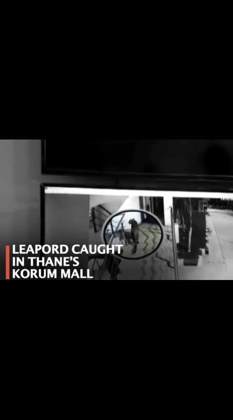 #leopard in korum mall of  #thane