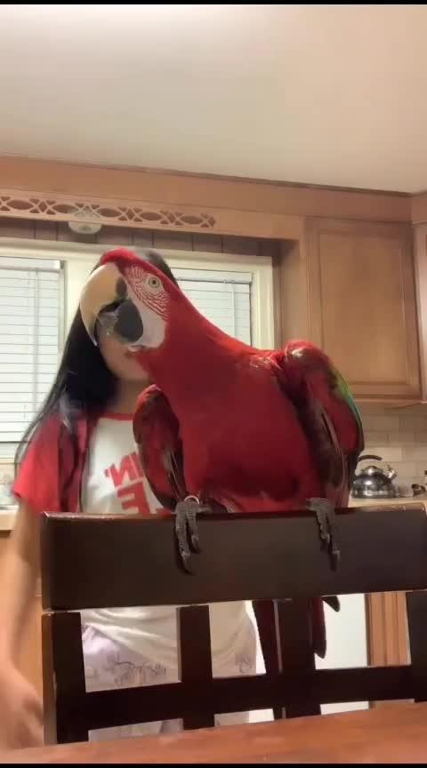 kya baat end karva diti #birdphotography #birds #bird #animallovers #animallover #so-ro-po-so #ro-po-so #ro-love #so-ro-po-so