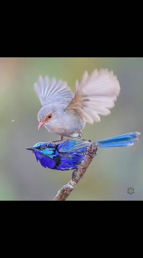 #captured #photographylovers #photoshootdiaries #birdphotography