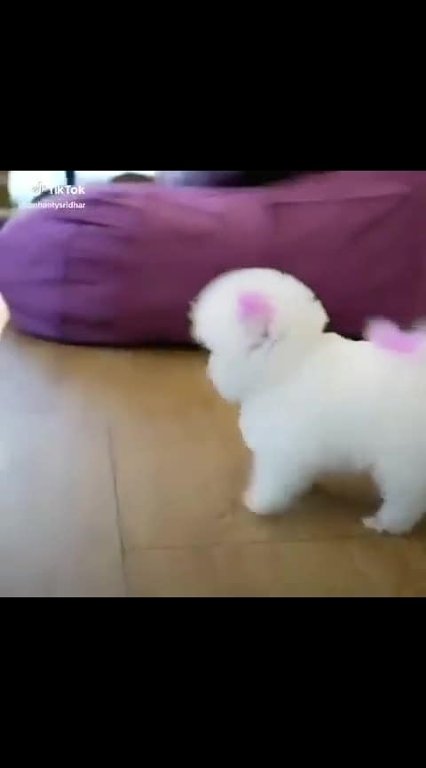 #puppylove #dog #puppies #puppy