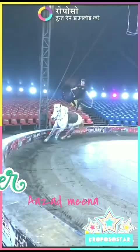 stunt king