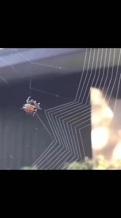 Spider building a web! - Follow @sciencesetfree for more awesome content! - #totalscience #science #spider #web #nature #creative