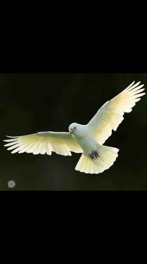#captured #photographyeveryday #photographerlife #birds