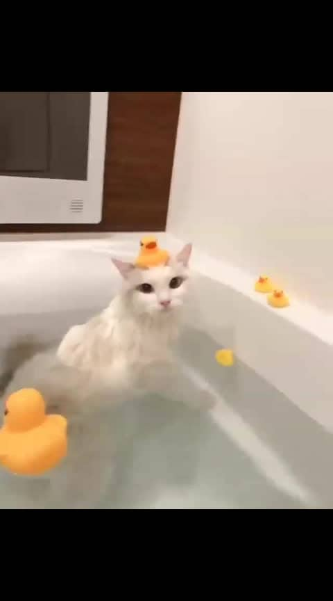 Hi Animal lovers😎 / Beautiful Souls 😎🤗 Wishing you all a G E Happy #catarday  #saturday  #weekend  be filled with magic🐈love🐺laughter🐱peace & Joy Have a Relaxing weekend 2y'all MAY GOD BLESS U #meow 🐺 #CatsOfTwitter🐈 Life is better with #adorable cats 🐾🐺 Saturday bath time