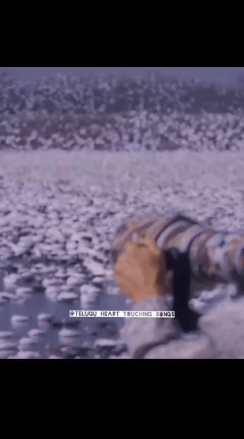 #robo #robo2 #rajinikanth #akshaykumar #shankar #ami #amijackson #tollywood #tollywoodactress #tollywoodactor #tollyactor #tolly #teluguactress #love #telugumemes #telugumovie #movies #telugucinema #teluguactor #telugu #kollycinema #kolly #kollywoodactor #kollywood #kollywoodcinema #song #songs #music #bollywood