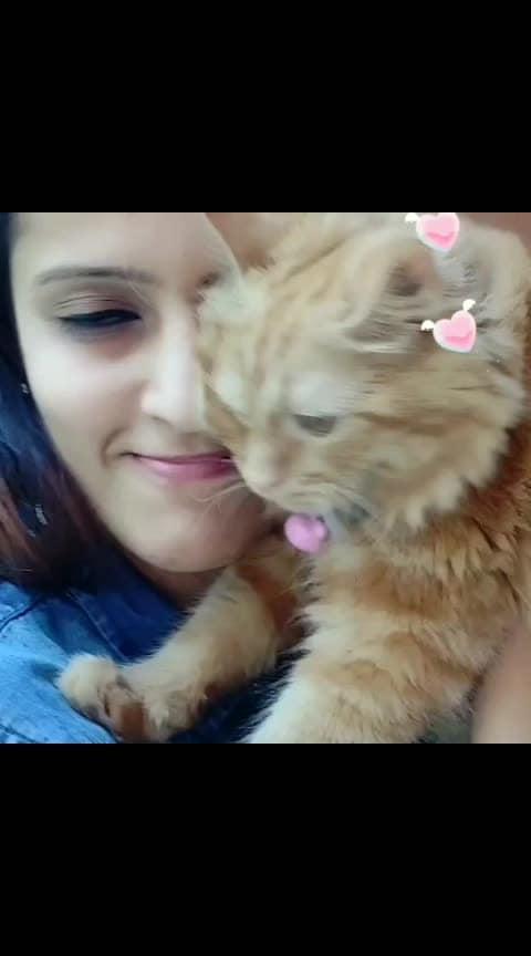 #catlove #pet #bhfyp #funny #ilovemycat #lovecats #catlife #catlove #caturday #catofinstagram #kittylove #cutecats #catloversclub #gato #mojo @roposocontests