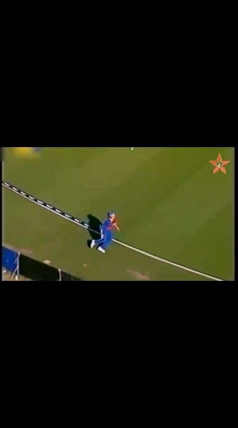 cricket cricket