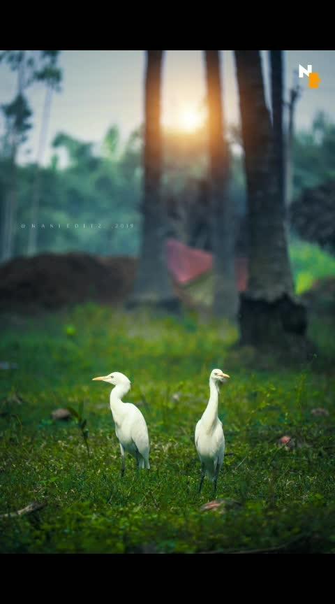 NE Captures....😎😎😎#photography #lovephotography #love-photography #birds