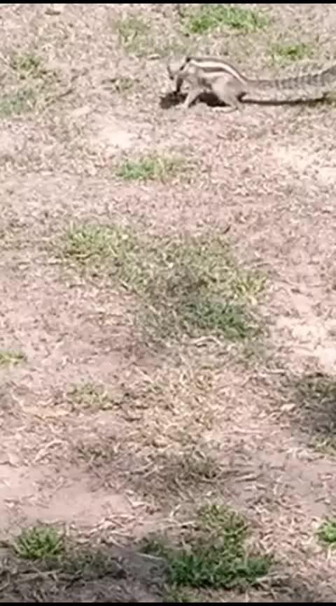 #squirrels #shootdiaries ..#naturekepass ..