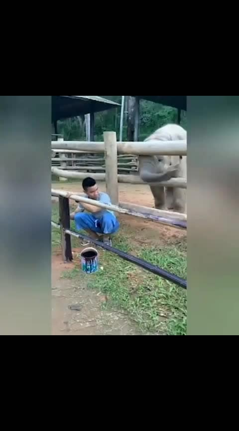 #comeon-he-just-want-to-play #elephant-love-to-play