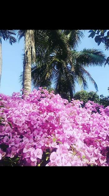 muahh#flowers#vogenwaliya#saveature#motherearth🌹🌹🌲🌴🌲🌱🌳🌴