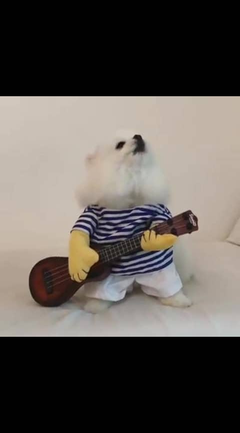#doglover #cuteness-overloaded #cutieeeee