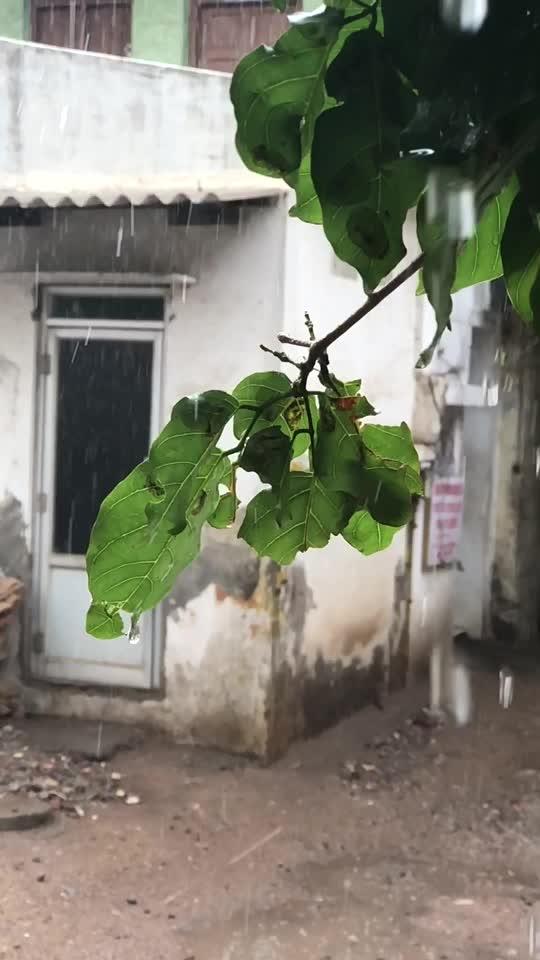 #rain #beauty #nature #iphone #iphone8plus #slomo #visuals #leaf #tones