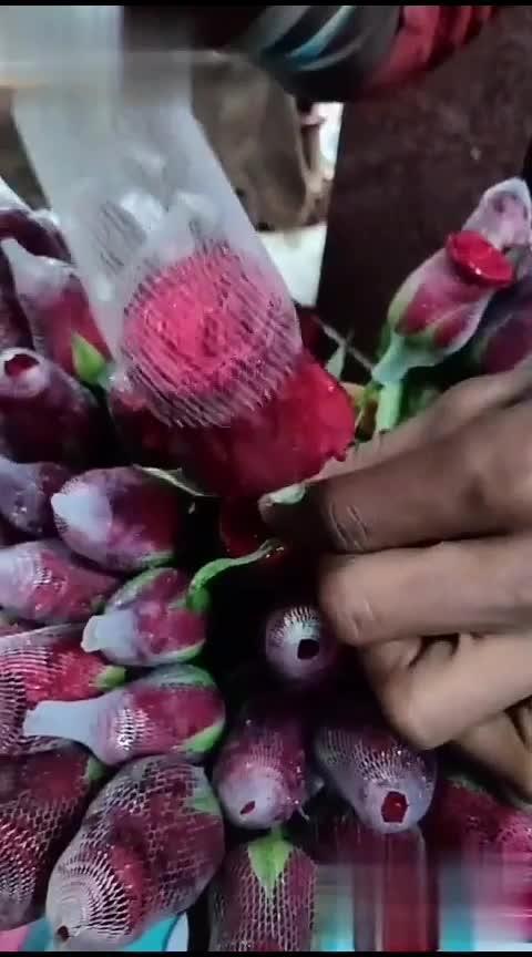 #red-rose