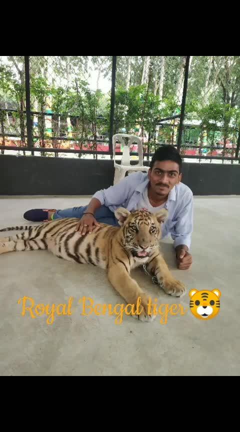 #thailand #thailandtourism #thailanddiaries #bengaltiger#asian #-india #roposo#rops-star