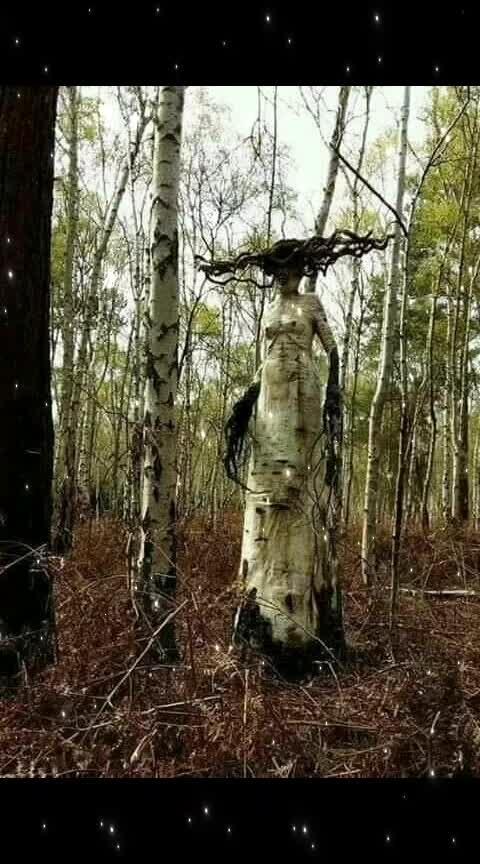 #tree_magic  #unbelievable_world