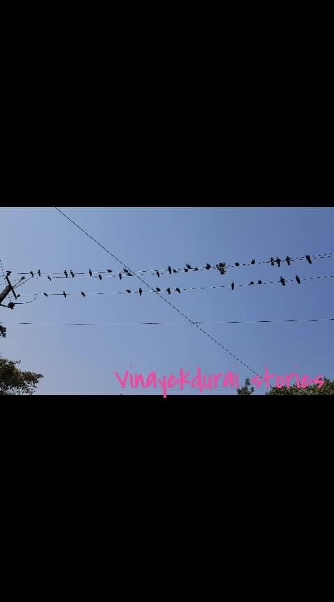 #natureshots #squirrel-fun-moments #birdsworld #nature #creatures #samsungnote8  #captured