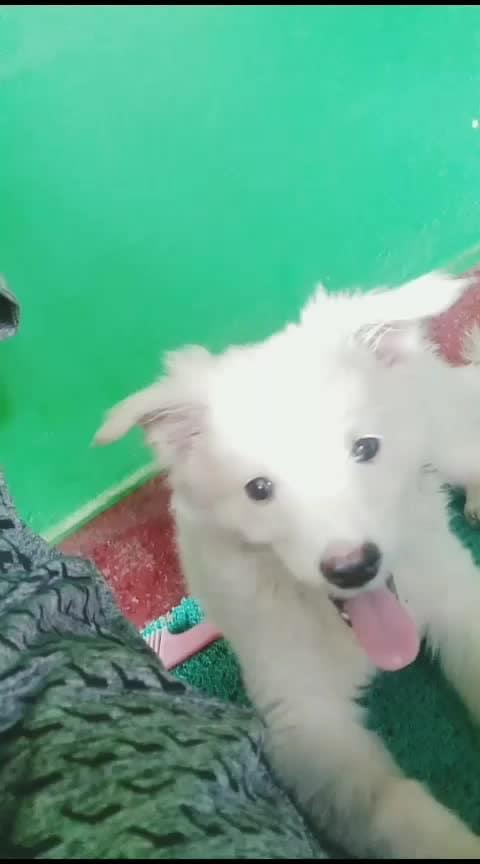 Mind ചെയ്യാതെ ഇരുന്നപ്പോൾ അവസാനം തന്നെ എഴുന്നേറ്റു പോയി 🐩candyboo #risingstar #petlove #doglover #puppies #featuredvideo