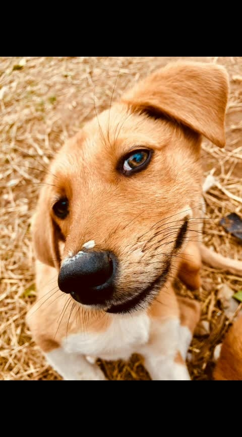 #photoshootdiaries #photography #photo-shoto #photo-roposo #love-photography #doglover #koco